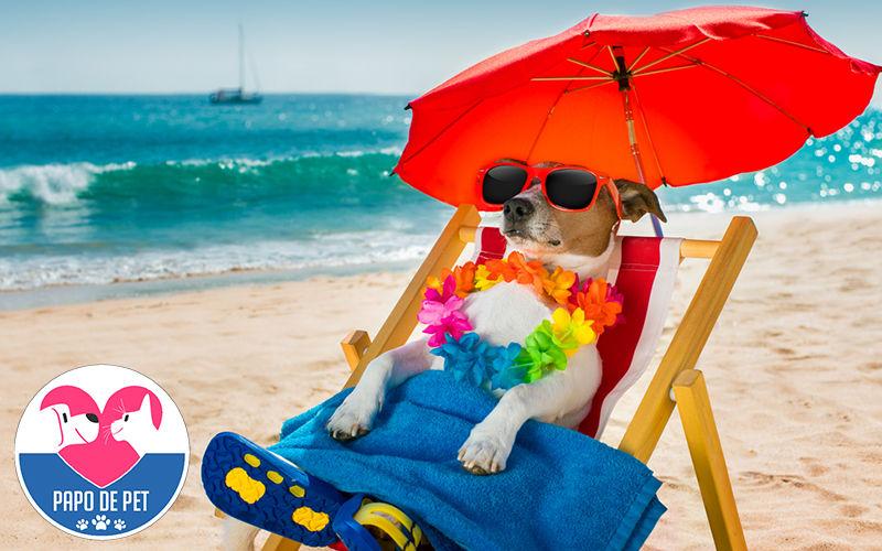 Imagem ilustrativa da notícia: Férias: os pets vão viajar também? Saiba o que fazer
