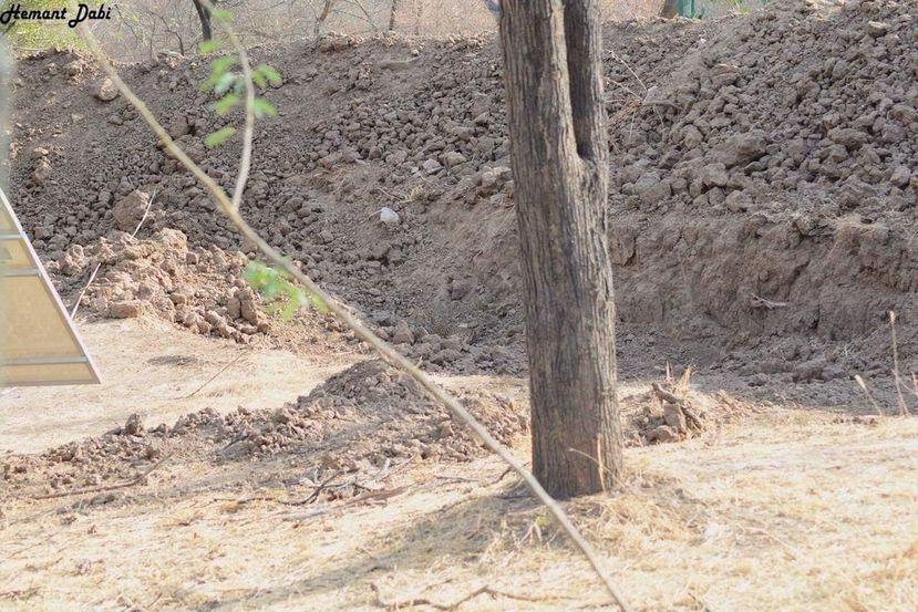 Imagem ilustrativa da notícia: Encontre um leopardo na foto: desafio viraliza na internet