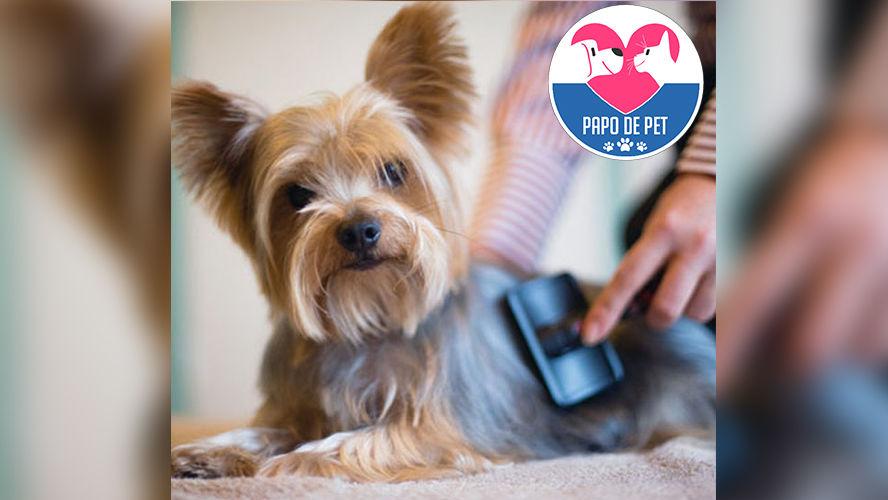 Imagem ilustrativa da notícia: Como manter a saúde da pele e pelagem do pet? Confira as dicas!