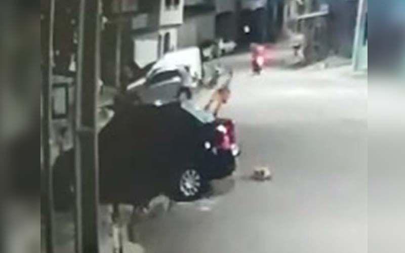 Animal foi covardemente agredido por um homem. O flagra viralizou e gerou revolta.