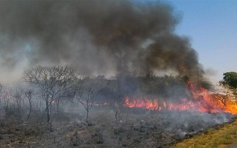 Imagem ilustrativa da notícia: Governo apura ameaças contra jornalista que denunciou queimadas