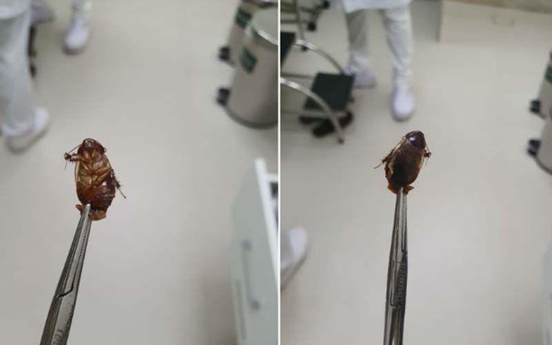 Após o procedimento de limpeza no local, a paciente foi medicada.