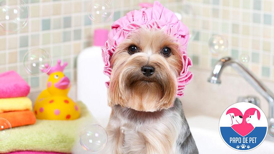 Imagem ilustrativa da notícia: Shampoo para cães é tudo igual? Veja como escolher os produtos ideais para o seu pet