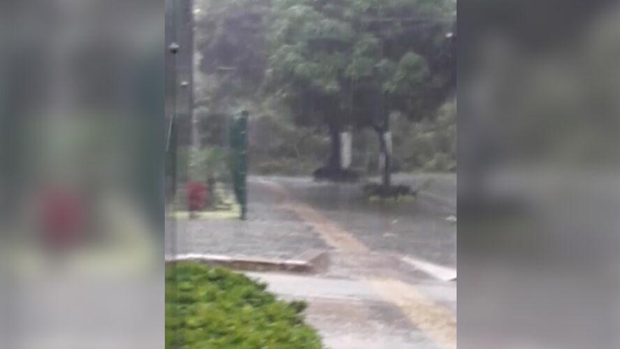 Imagem ilustrativa da notícia: Árvore desaba e interdita avenida José Malcher . Veja como está o trânsito na Grande Belém