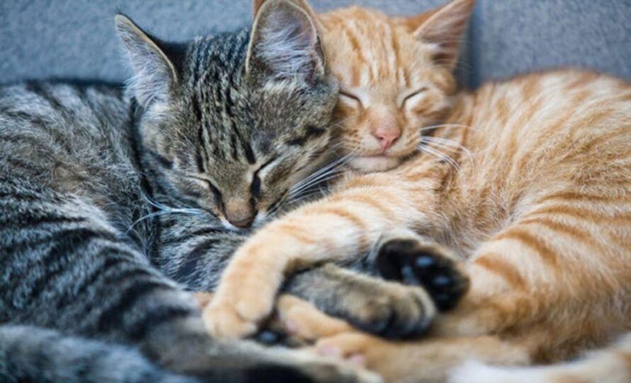 Imagem ilustrativa da notícia: Você tem um gato? Saiba o que significa a cor de cada animal