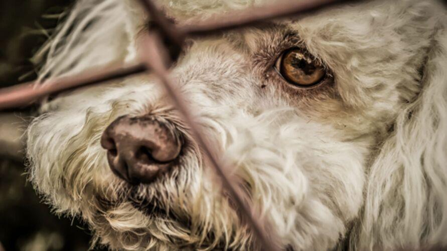 Imagem ilustrativa da notícia: Bolsonaro sanciona a lei que aumenta pena de maus-tratos a cães e gatos