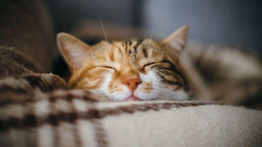 Imagem ilustrativa da notícia: Seu gato dorme muito? Entenda a razão de tanto sono