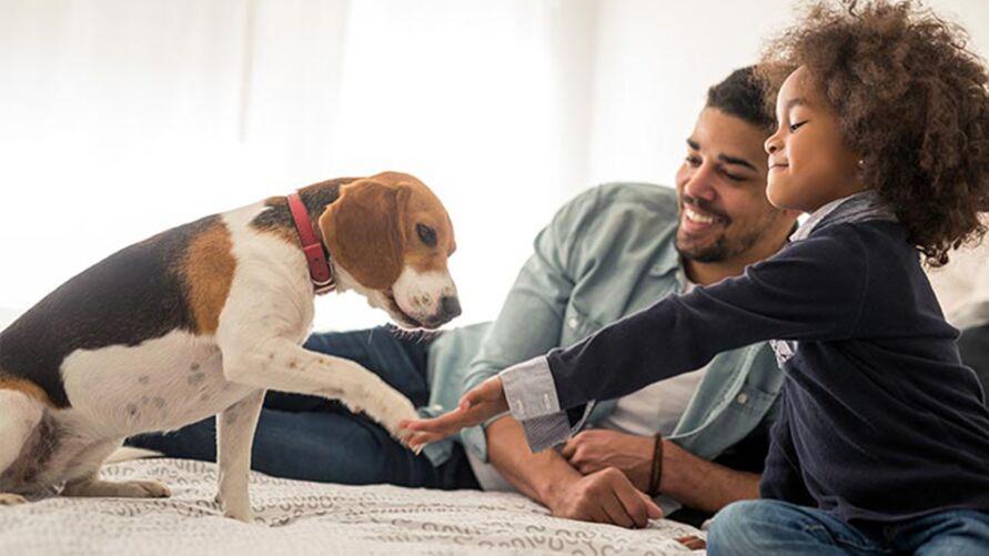 Pessoas alérgicas podem conviver com pets, mas precisam tomar certos cuidados.