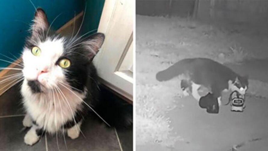 Imagem ilustrativa da notícia: Gato rouba sapatos dos vizinhos e dona cria grupo para devolução