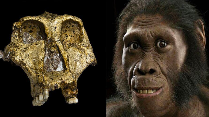 Imagem ilustrativa da notícia: Crânio de ancestral humano de 2 milhões de anos é encontrado, veja!