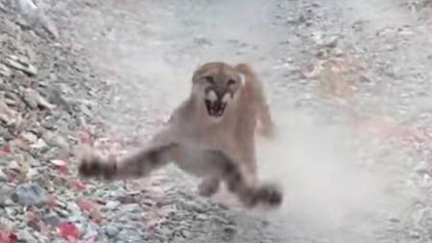 Homem grava momento em que é perseguido por puma em trilha