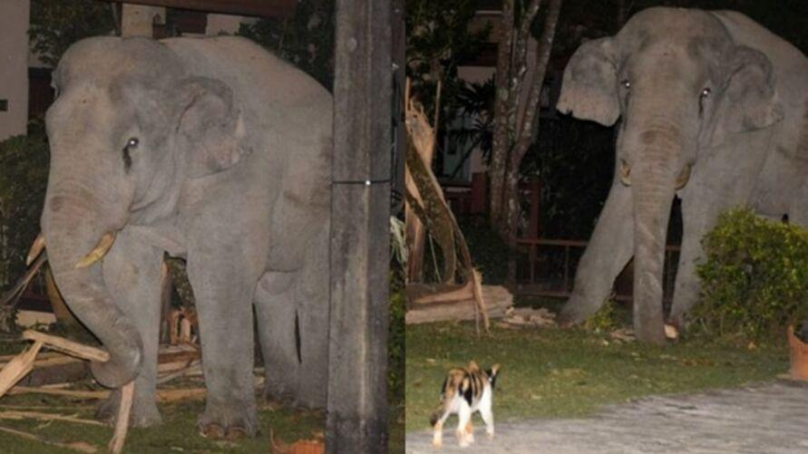 Imagem ilustrativa da notícia: Gato bota elefante de 4 toneladas para correr após gigante invadir quintal; veja!