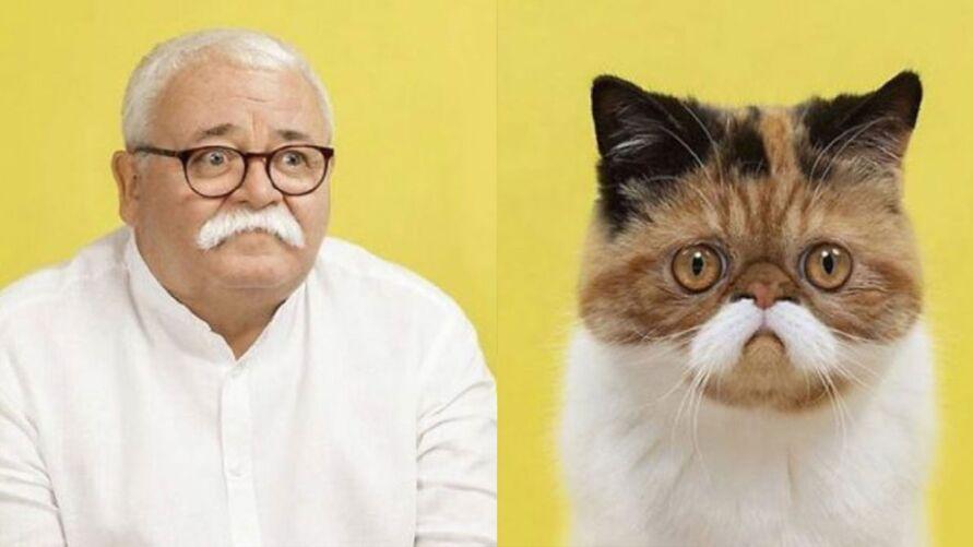 Imagem ilustrativa da notícia: Fotógrafo cria coletânea com fotos de gatos e seus sósias humanos, veja!