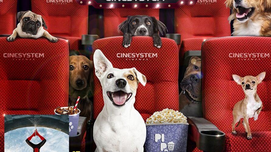 Imagem ilustrativa da notícia: Cine Pet: sessão de cinema aberta a animais de estimação está de volta!