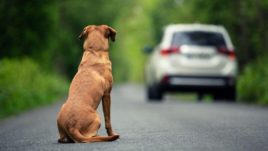 Imagem ilustrativa da notícia: Dezembro Verde alerta sobre maus-tratos e abandono de animais