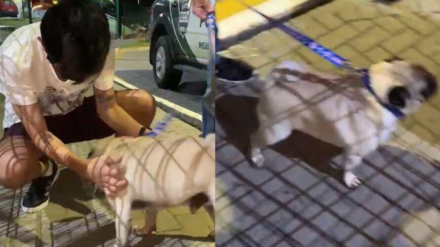 Imagem ilustrativa da notícia: Casal é preso após exigir R$ 1 mil para devolver cachorro desaparecido