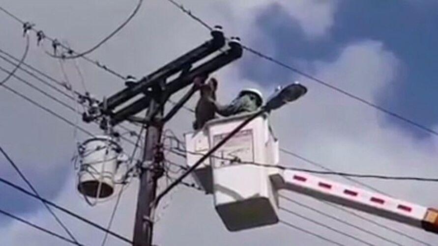 A preguiça estava agarrada a um poste telegráfico