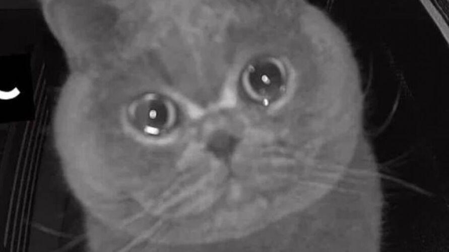 Imagem ilustrativa da notícia: Gato chora ao ser abandonado pelos donos que foram viajar. Veja o vídeo!