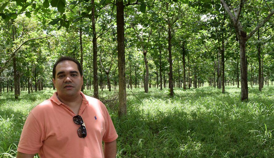 Gustavo Silveira aposta no mercado sustentável de madeira plantada.