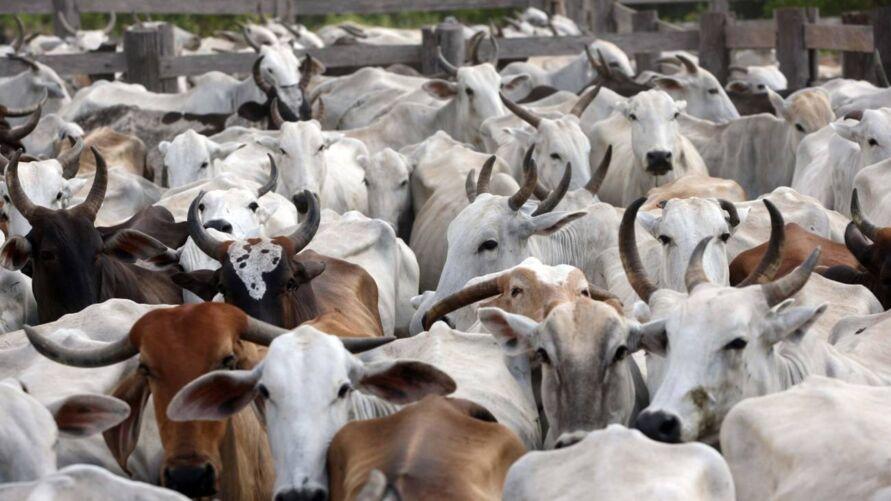 Imagem ilustrativa da notícia: A importância da boa alimentação na criação de animais