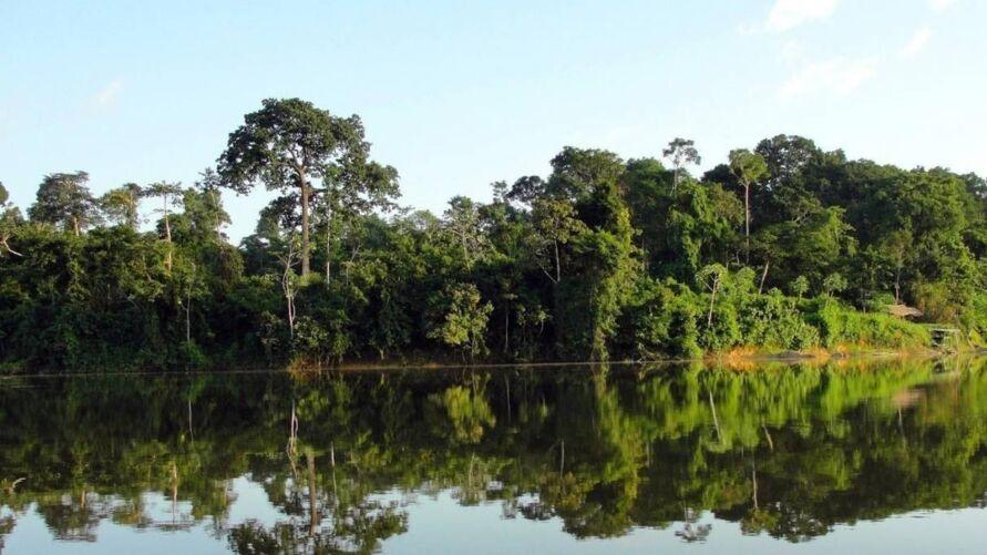 Imagem ilustrativa da notícia: Governo do Pará lança edital do Fundo Amazônia Oriental para atrair recursos estrangeiros