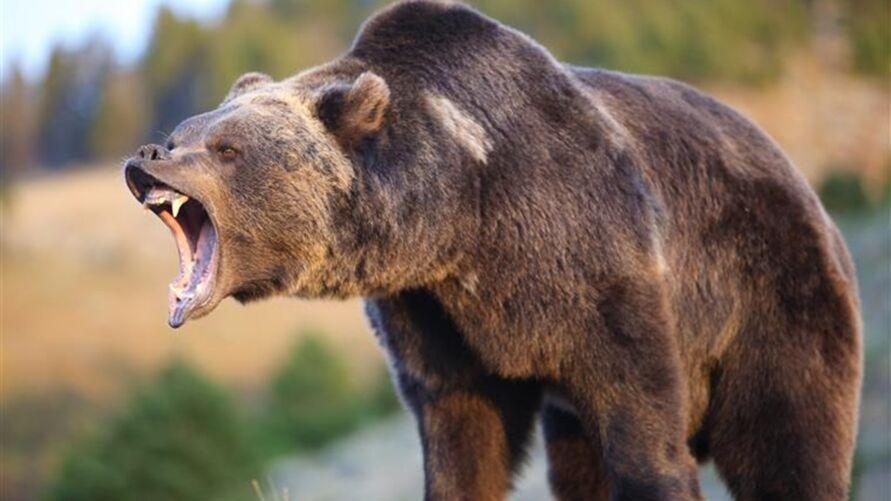 Imagem ilustrativa da notícia: Mulher leva mordida de urso no bumbum ao sentar em vaso sanitário