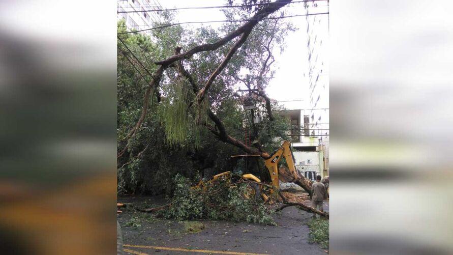Uma árvore caiu e interditou o trânsito na avenida Serzedelo Correa, em Belém.