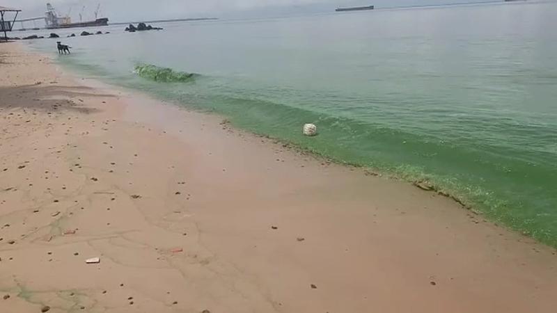 Imagem ilustrativa da notícia: MPF apura níveis altos de cianobactérias na região de Barcarena