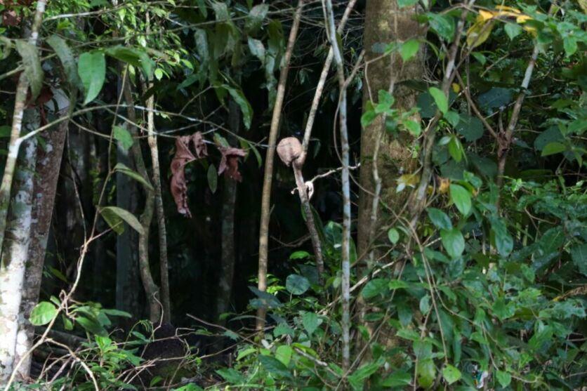 Imagem ilustrativa da notícia: Crânio é encontrado pendurado em mangueira perto de motel
