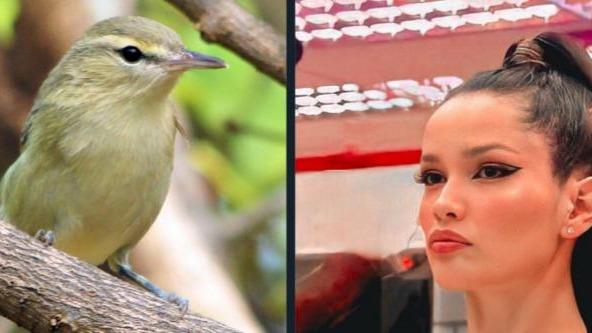 Imagem ilustrativa da notícia: Juliette ganha homenagem e vira nome de ave