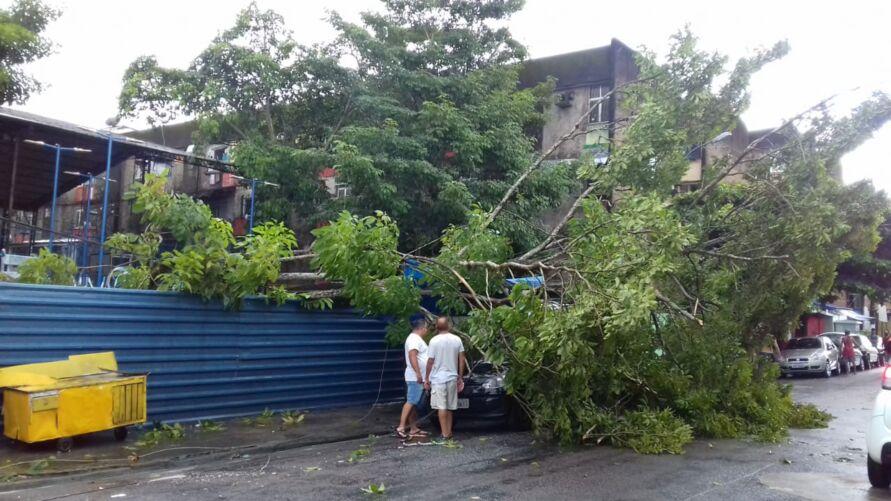 Árvore caiu e atingiu carros e fiação elétrica
