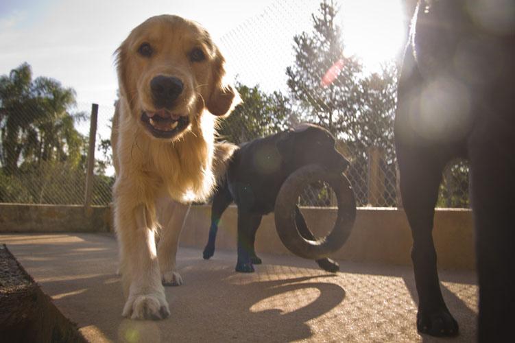 Intoxicação afeta estômago e fígado dos pets