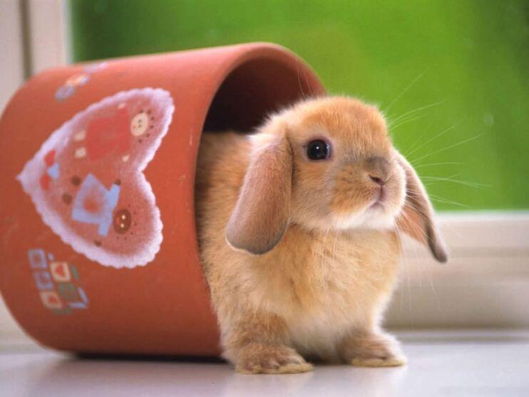 Imagem ilustrativa da notícia: Páscoa: veja 11 coelhos fofinhos para alegrar o seu dia
