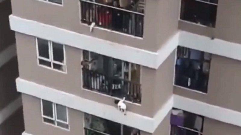 Imagem ilustrativa da notícia: Criança cai de 12°andar de prédio e é salva por entregador; veja o vídeo!