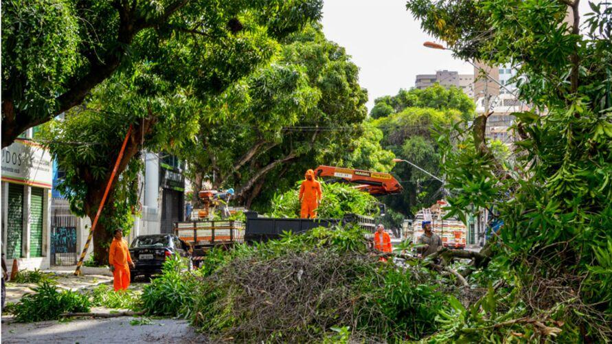 De acordo com informações da Prefeitura de Belém, parte da vegetação na área apresenta riscos à população e receberá manutenção.