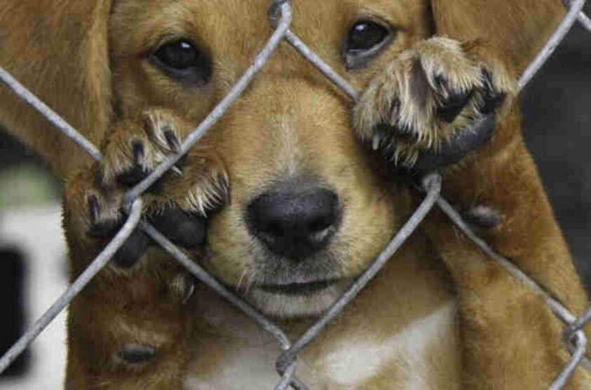 Imagem ilustrativa da notícia: Pará realiza ações de combate aos maus-tratos contra animais