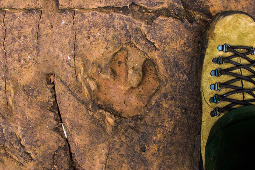 Pesquisadores brasileiros encontram pegadas de dinossauros