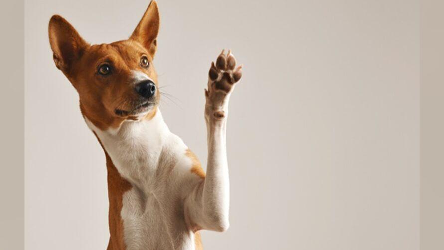 Imagem ilustrativa da notícia: Marituba promove Feira de adoção de pets. Confira!