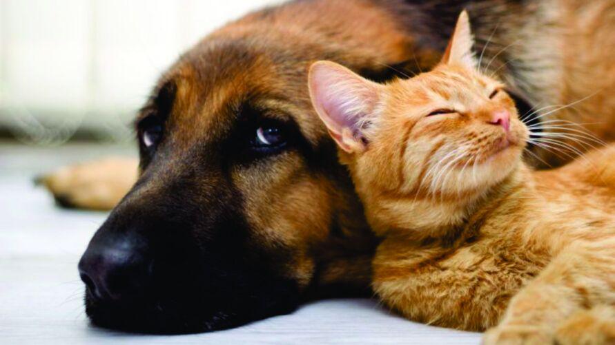 Na sexta-feira (30), a castração será voltada apenas para gatos. Sábado (1º), será o dia da castração de cachorros
