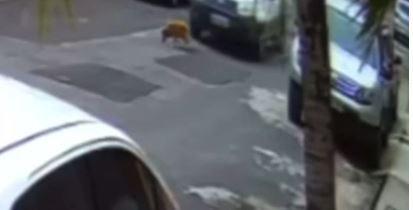 Imagem ilustrativa da notícia: Vídeo: motorista esmaga cabeça de cachorro de propósito