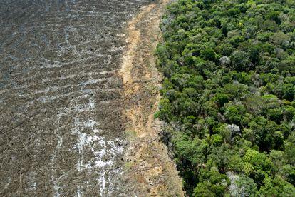 Vista aérea de floresta amazônica desmatada