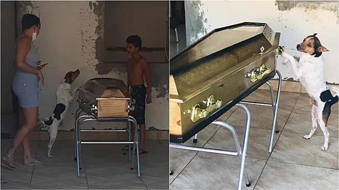 Cachorro permanece ao lado do caixão de tutora durante velório