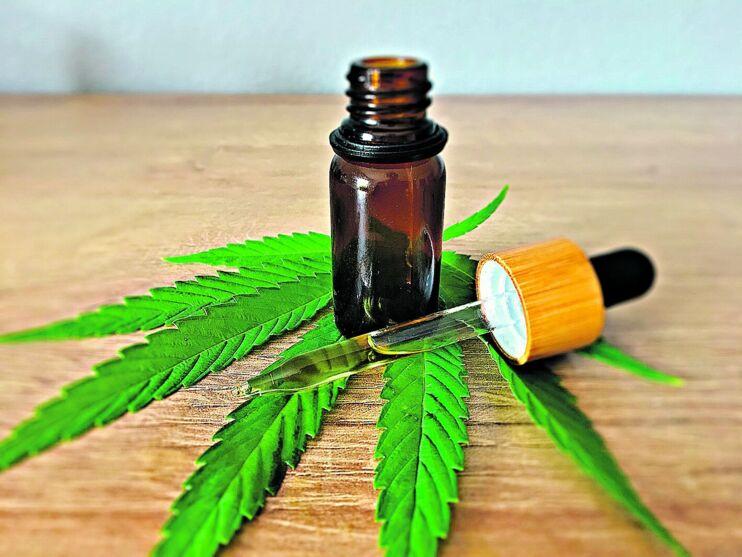 O Projeto de Lei prevê a liberação para uso medicinal e veterinário da Cannabis