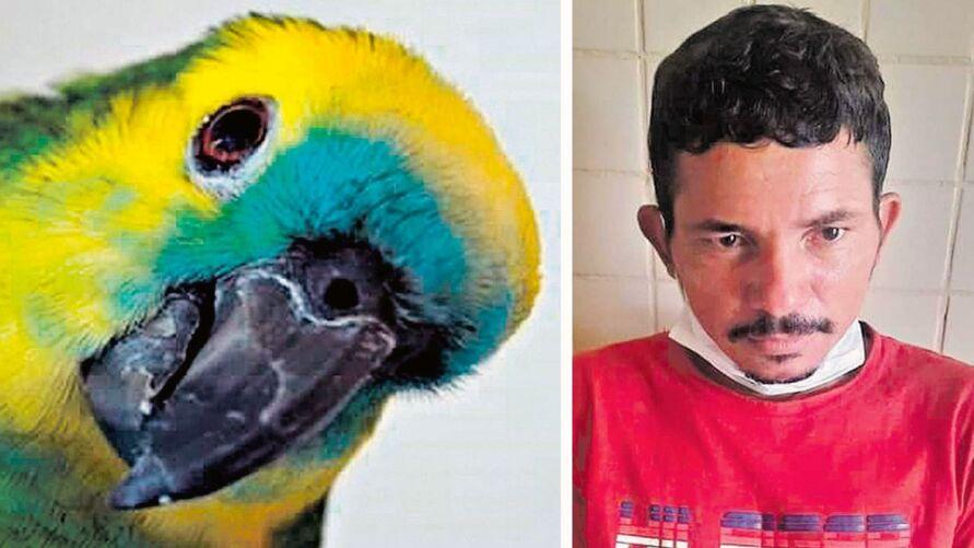 """Imagem ilustrativa da notícia: Papagaio X9 grita """"pega, ladrão!"""" e bandido vai preso; veja!"""
