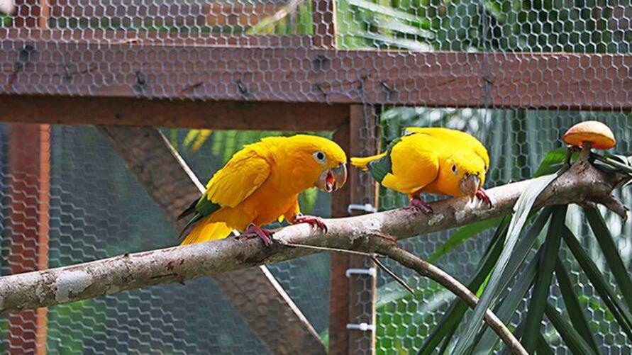 Imagem ilustrativa da notícia: Casais de ararajubas chegam ao Parque do Utinga