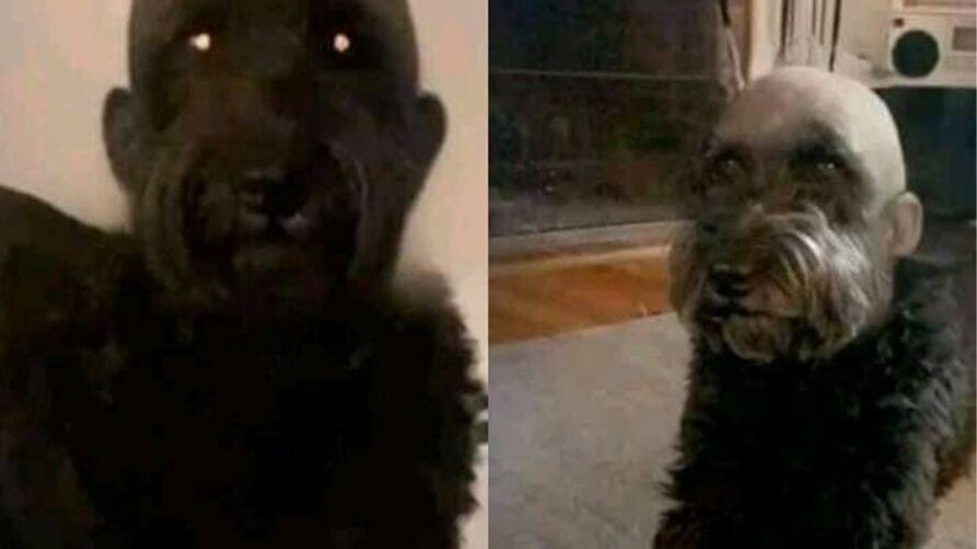 Aí você vai buscar seu cão no pet shop e ele volta assim, já pensou?