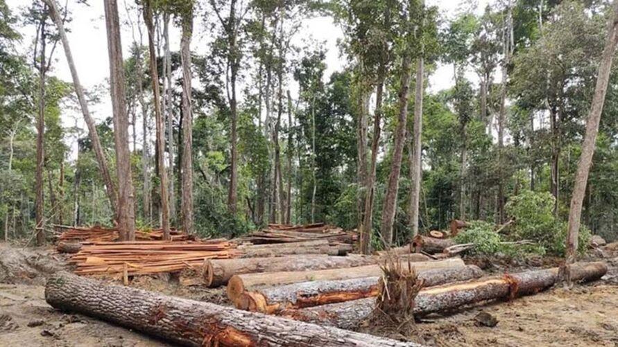 Cerca de 567 m³ de madeira foram apreendidas
