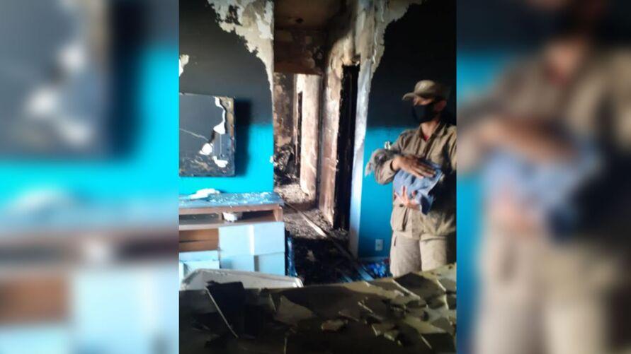 Imagem ilustrativa da notícia: Cadela é achada viva um dia após incêndio em apartamento