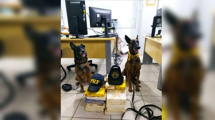 Os cães ajudaram os agentes da PRF localizarem a droga escondida no veículo.
