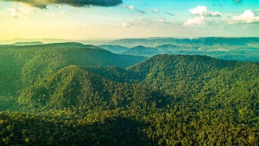 Manutenção das Florestas garante o uso e proteção adequados do meio-ambiente